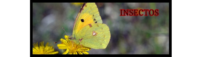 INSECTOS II