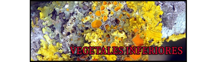 VEGETALES INFERIORES