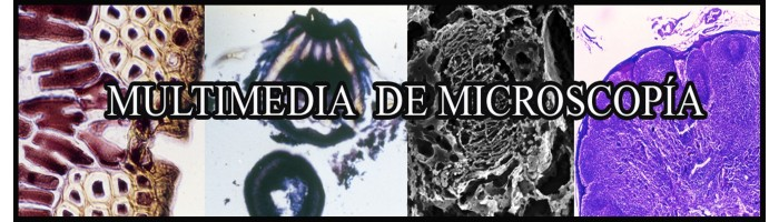 MULTIMEDIA DE MICROSCOPÍA